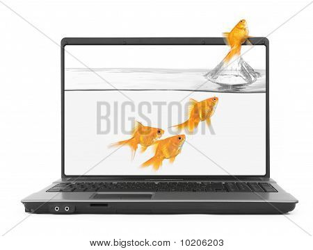 Goldfish Jumping Out Of The Notebook