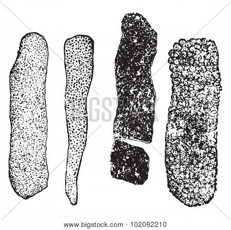 Granular casts, vintage engraved illustration.