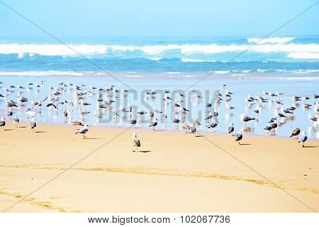 Seagulls at the beach near the atlantic ocean