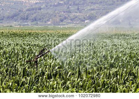 A Center Pivot Sprinkler System Watering A Grain Field In The Fertile Farm Fields Of Greece