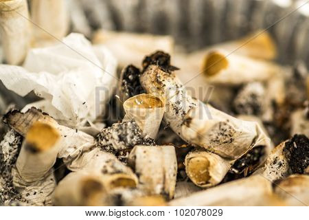 Macro Image Of Cigarette Butts