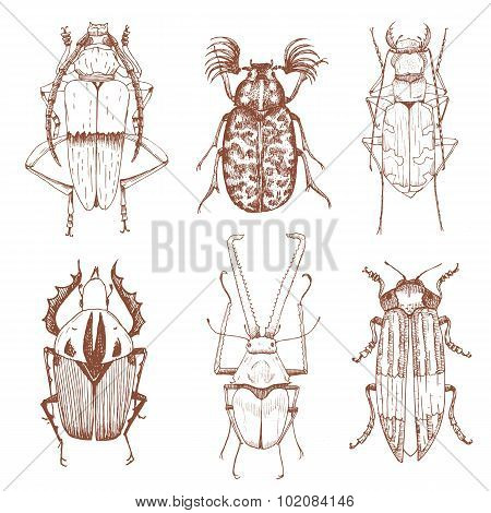 Nice vector hand drawn beetles