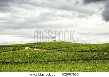 Vineyards Of The Kaiserstuhl Region, Baden-wurttemberg, Germany With The Symbol Of The  Area, A Big