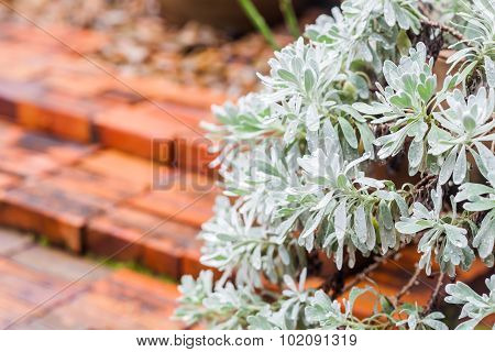 Green Leaves With Red Brick Background