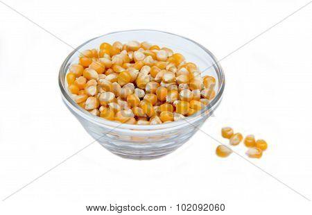Maize grains dried