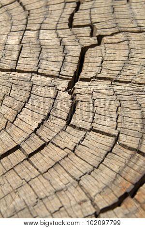 Dead Pine Tree Trunk