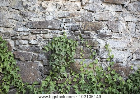 Climber On Stony Wall