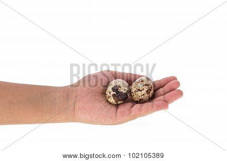 Hand Holding Quail Egg Isolated On White Background