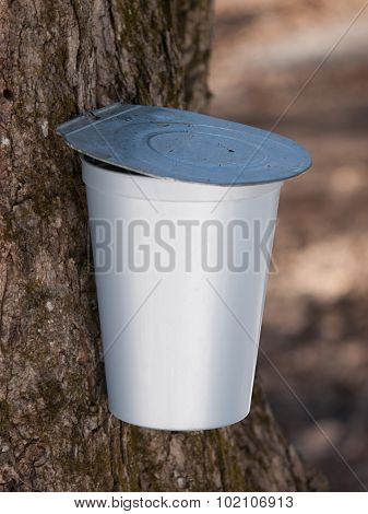 Maple Syrup Bucket On Tree Close-up