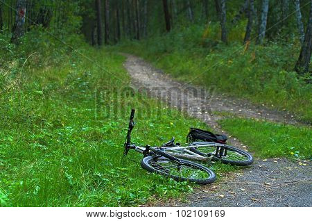 Bike And Backpack Lying On The Forest Trail