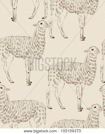 sketch Lama