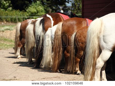 Line Of Horses With Rear And Tails