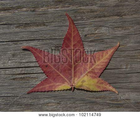 1st Leaf of Autumn