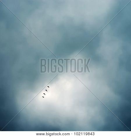 flock of birds flying in formation