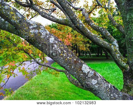 Mossy Tree In Early Autumn