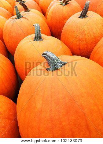 Big Orange Pumpkins At The Marketplace