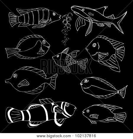 Sketch of sea Fish