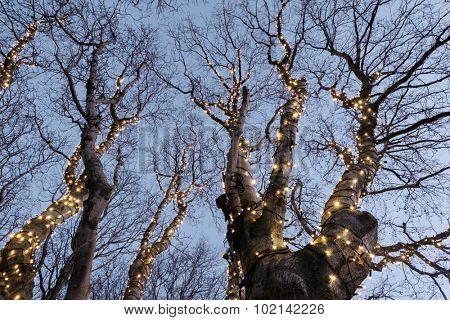 Beautiful christmas decorations in a tree
