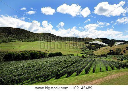 A vineyard landscape on Waiheke Island New Zealand