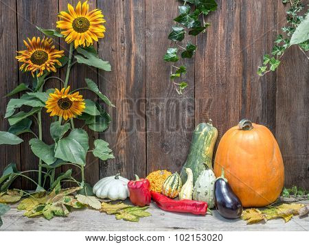 Composition of pumpkins, zucchini,summer squashes, red pepper against rustic wooden plank wall