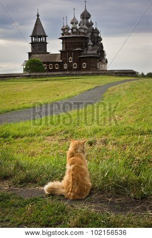 Cat On The Background Of The Wooden Churches