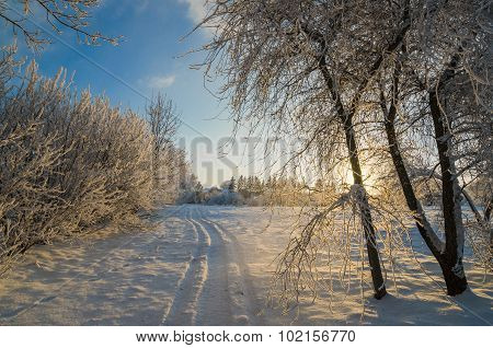 Trees Covered With Hoarfrost Against The Blue Sky