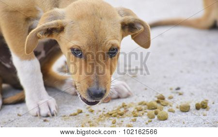 Puppies Eat Food