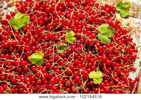 Fresh red currants for background