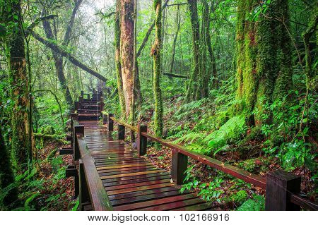 Moisture Of Mountain Rain Forest Doi Inthanont National Park Chiangmai Northern Of Thailand Natural
