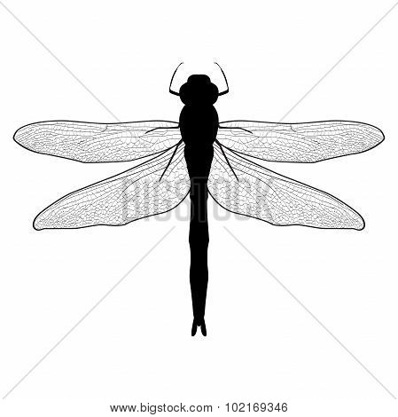 black and white  illustration of a dragonfly. Dragonfly isolated on white background