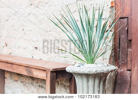 Green Plant Decorate In Garden