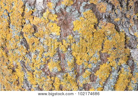 Tree Bark With Moss Background