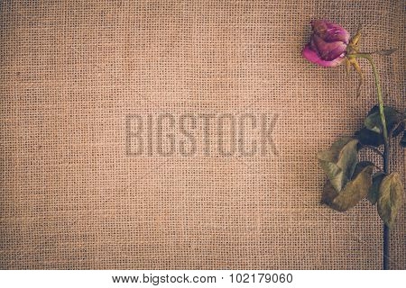 Withered Flower Background / Withered Flower / Withered Flower On Sack Background