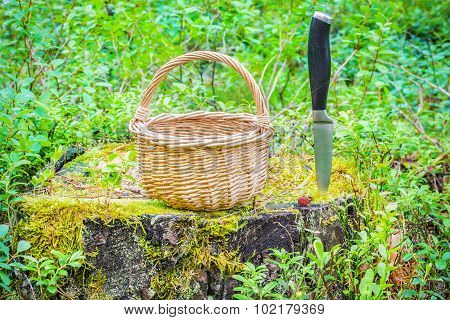 Empty basket on the stump in the forest