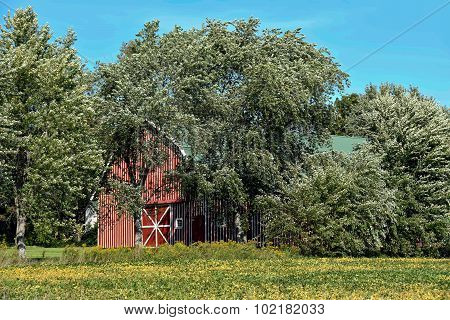 striped barn in trees