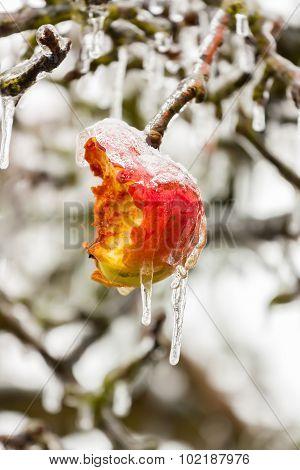 Froze Apple