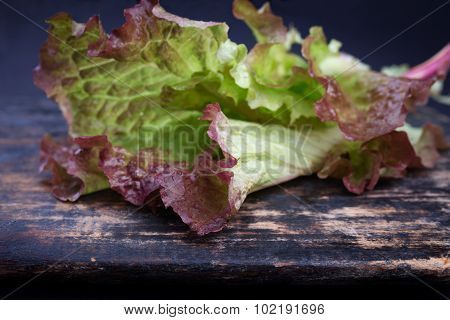 Red coral lettuce