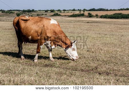 Lonely Cow Pasture