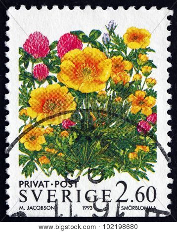 Postage Stamp Sweden 1993 Buttercup, Flowering Plant