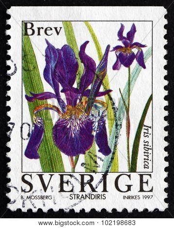 Postage Stamp Sweden 1997 Iris, Flowering Plant