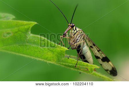 Muzzle fly