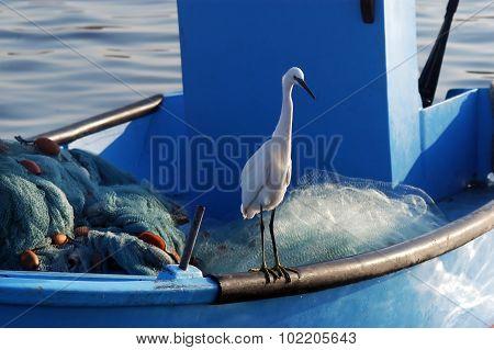Ardeidae Bird In Acre Israel