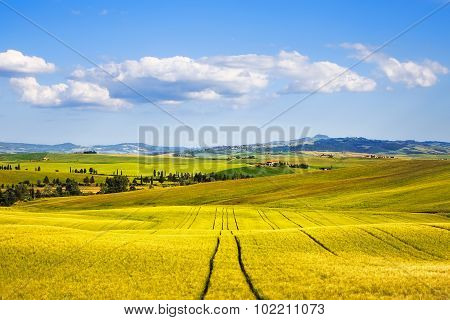 Wheat Field And Tracks In Summer. Tuscany, Italy