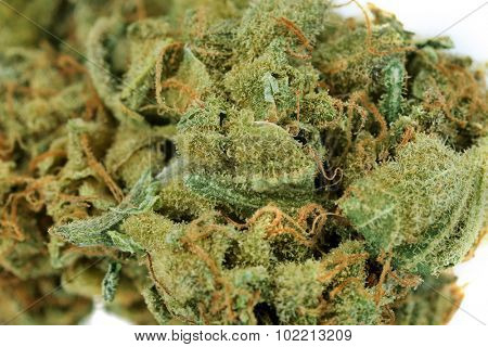 Dry medical cannabis close up