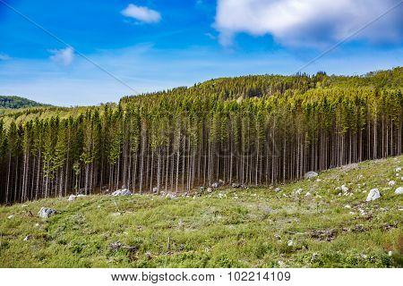 Deforestation in Norway