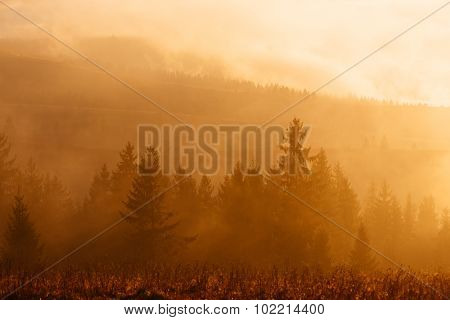 Morning landscape with a colorful sunrise. Spruce forest in the hills. The first rays of the sun in the fog. Color toning