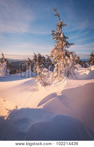 Christmas view. Morning landscape with snowdrifts in the mountain forest