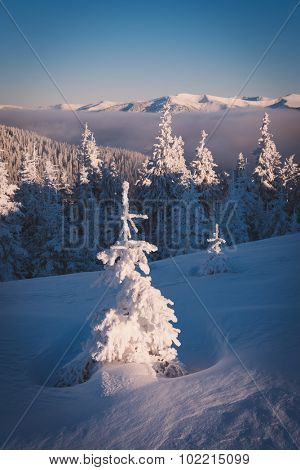 Winter landscape after a snowfall. Snowy fir tree in the mountains. Beauty in nature