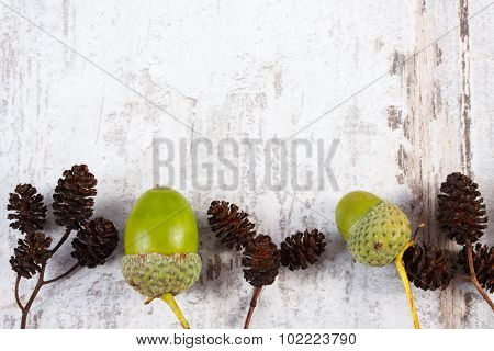 Brown Alder Cone And Green Acorn With Copy Space For Text