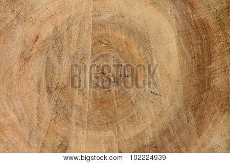 Linden Wood Texture Background